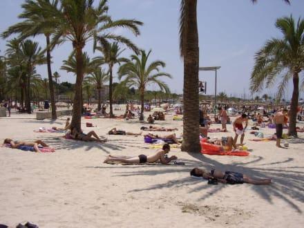 Palmenstrand in El Arenal - Strand El Arenal/S'Arenal