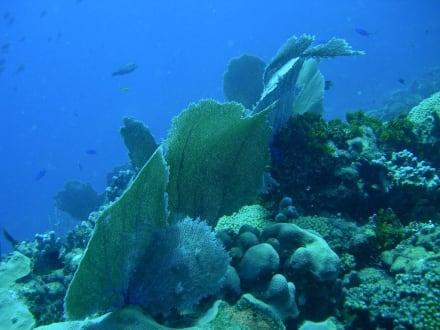 Unterwasserlandschaft vor Catalina - Unterwasser
