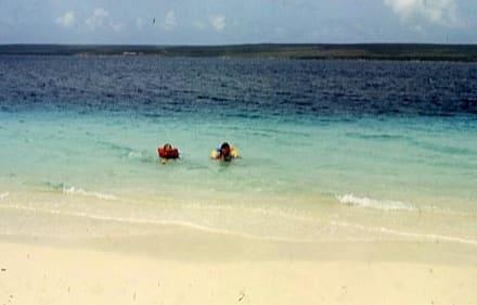 Die kleinen Wasserratten - Insel Klein-Bonaire