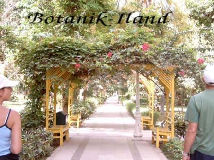 Botanik Iland - Botanischer Garten Assuans - Kitchener Island
