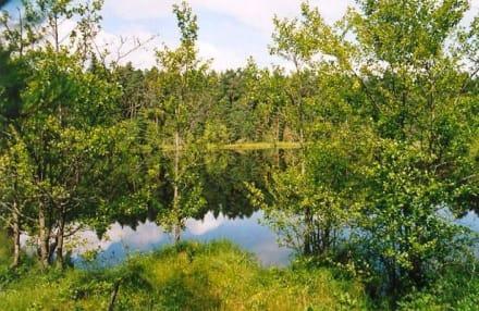 saurer See im Wigierski Park - Wigry See