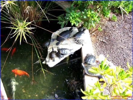 Aquarium - Marineland
