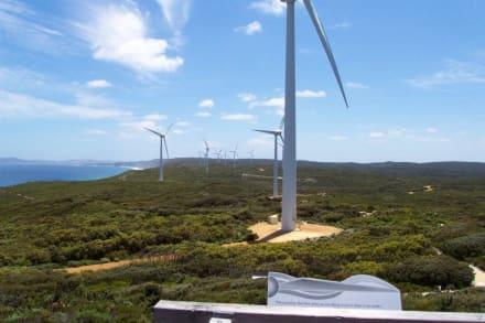 Blick über die Wind - Farm - Albany Wind-Farm