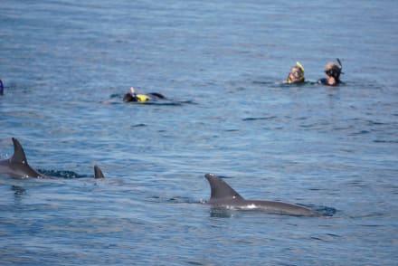 Schwimmen zusammen mit den Delfinen  - Delfinschwimmen Delfine & Meer
