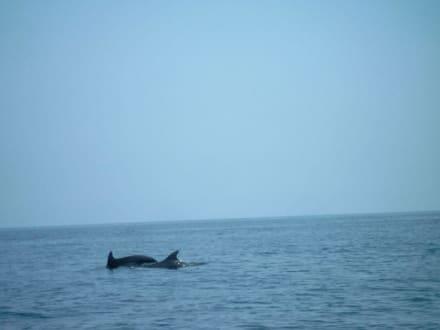 Dar Djerba Dahlia - Delphinausflug - Tour & Ausflug