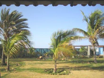 Zimmerausblick - Hotel Brisas de Coche / del Mar
