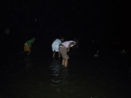 Aussetzen der Opfergaben im Meer - Loy Krathong