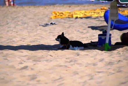 Schattiges Plätzchen - Hundestrand La spiaggia di Pluto Bibione