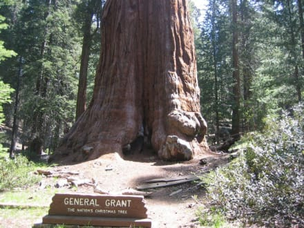 General Grant Tree - Sequoia & Kings Canyon National Park