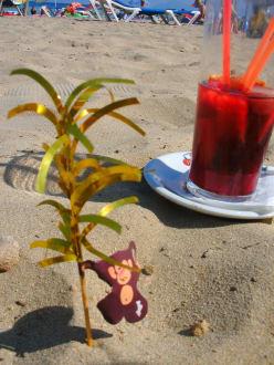 Service auch manchmal bis an den Strand. Lecker!  - Cafe Jamaica