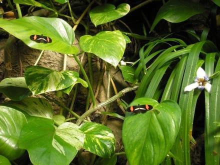 Schmetterlinge - Franklin Park Conservatory