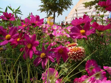 Blumen - Bundesgartenschau 2005 (existiert nicht mehr)