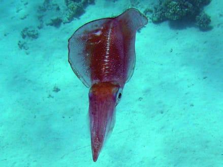 Kalmar - Schnorcheln Makadi Bay