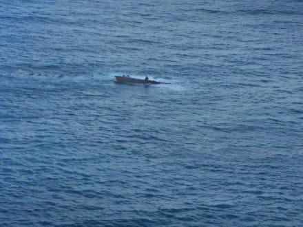 Das unendliche Meer mit dem Wrack - Helikopter-Rundflug Punta Cana