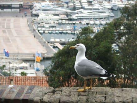 Strand/Küste/Hafen - Yachthafen Cannes