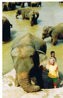 Elefanten Haut nah! - Elefantenwaisenhaus Pinnawela