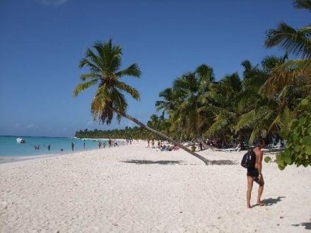 Bacardi-Palme - Isla Saona