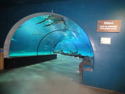tunnel aquarium bild diergaarde blijdorp in rotterdam. Black Bedroom Furniture Sets. Home Design Ideas