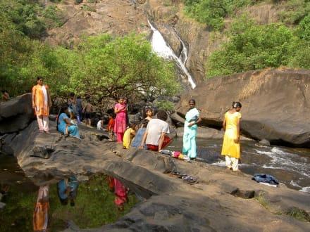 Waters (river/lake/waterfall)  - Dudhsagar Falls