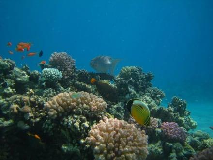 Unterwasserwelt - Schnorcheln Makadi Bay