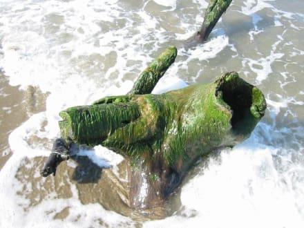 Strandspaziergang - Playa Cabarete