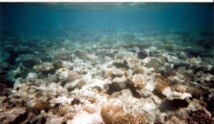 Unterwasserwelt - Schnorcheln Safaga