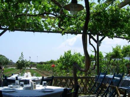 Blick auf die Weinreben - Taverna Ampeli