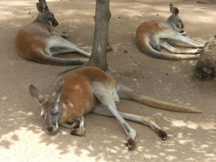 Sonstige Tiere - Taronga Zoo