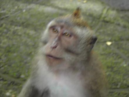 Monkey forrest - Affenwald Ubud
