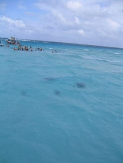 Stingray City - Stingray City