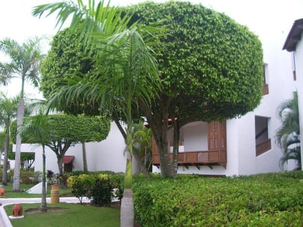 Gartenanlage - Hotel Occidental Grand Flamenco Punta Cana