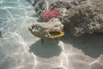 Am Riff rechts - Schnorcheln Hurghada