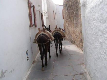 Transport - Eselreiten Lindos