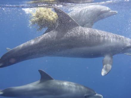 Selbst aufgenommen !! - Delfinausflug mit Mo
