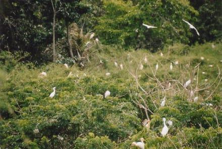 Reiher im Vogelreservat - Vogelreservat Tra Xu