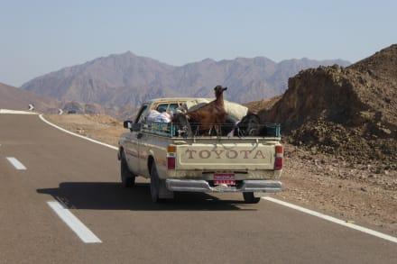 Tiertransporter... - Wüstentour Sharm el Sheikh