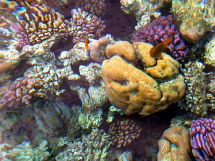 Riffe/Korallen - Schnorcheln Hurghada