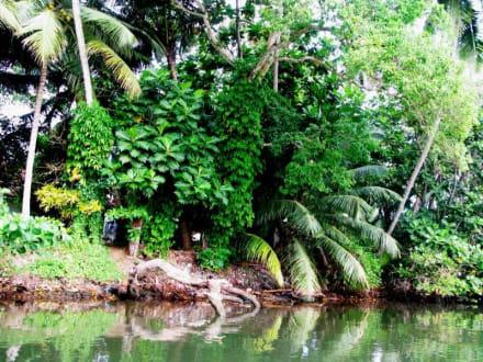 Üppige grüne Natur - Bentota Fluss- und Mangroven Tour