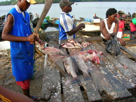 Sauber machen des Fisches - Fischmarkt