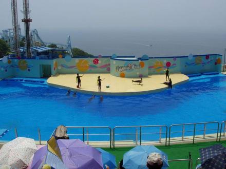Delphin-Show im Ocea Park - Ocean Park