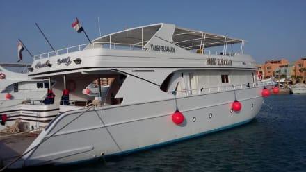 Das neue Boot - Delfinschwimmen Yasser