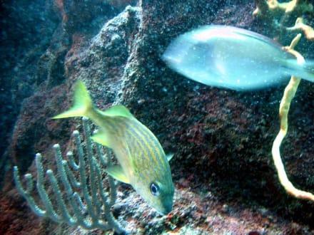 Bunte Fische- Xcaret - Freizeitpark Xcaret