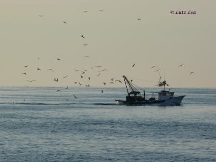 Fischkutter - Ausflug mit der Rossana auf die Adria