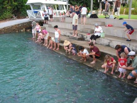Fischfütterung - Fischfütterung