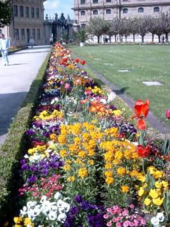 Blütenpracht im Hofgarten der Residenz - Residenz Würzburg