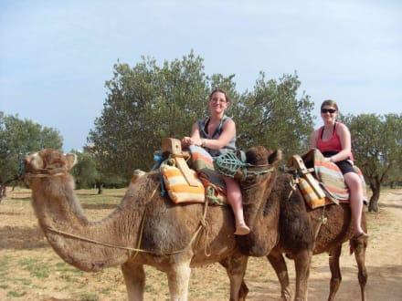 Kamelreiten - Kamelreiten Hammamet