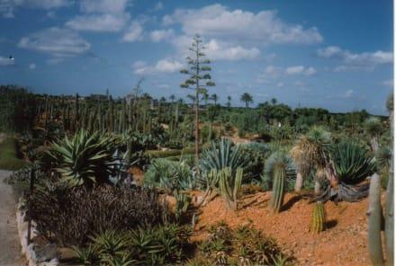 Kakteen allover - Botanischer Garten Botanicactus Ses Salines