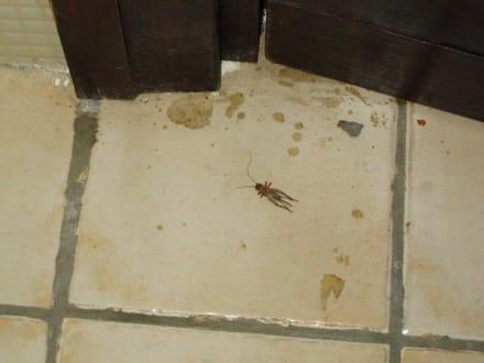 ungeziefer dreck haare im bad bild hotel atlas airport in casablanca sonstiges marokko marokko. Black Bedroom Furniture Sets. Home Design Ideas