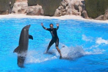 Delphinshow im Loro - Parc - Loro Parque