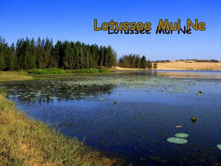 Lotussee - Sanddünen